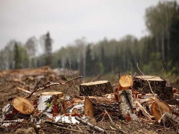 На Днепропетровщине общественники губят зеленые легкие