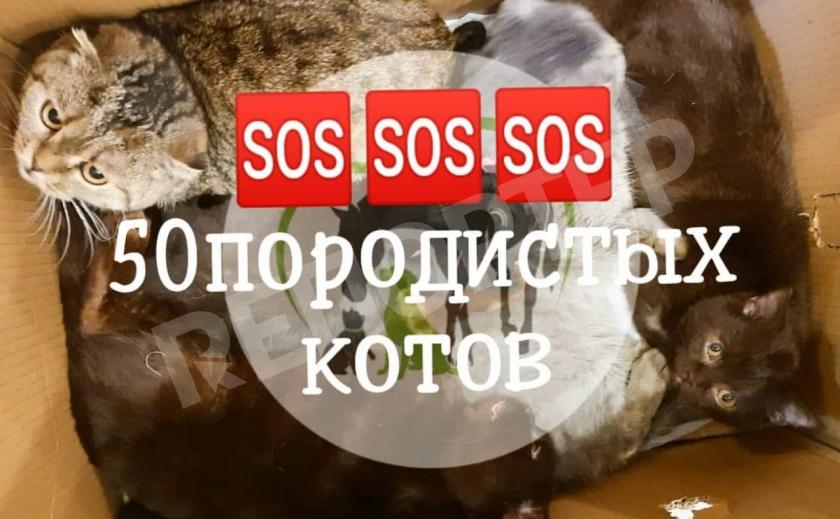 В Днепре приют ищет хозяев для 50 породистых котов