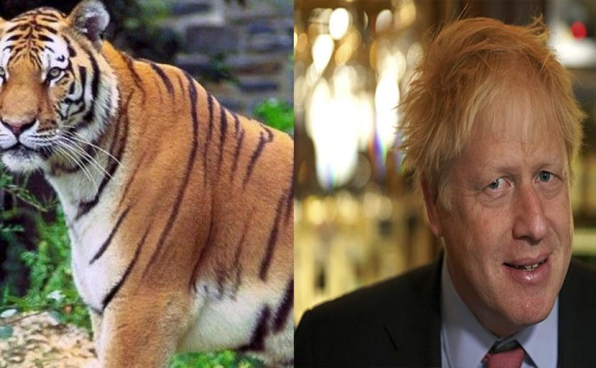 Британского премьер-министра госпитализировали с COVID-19, а в США коронавирус подхватили львы и амурские тигры