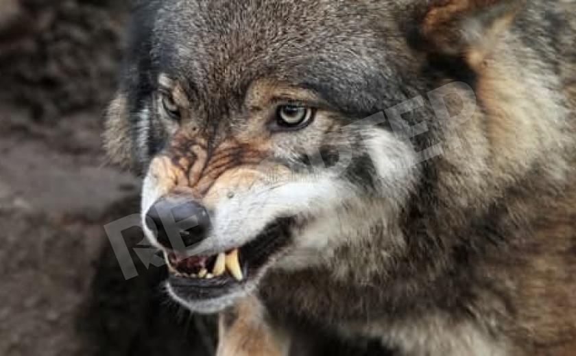 Названо число зверя на Днепропетровщине. Рогатых хватает