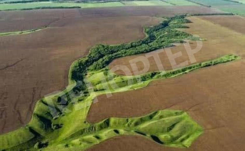 На Днепропетровщине погубили 50 заповедников и уничтожили редкие виды животных и растений