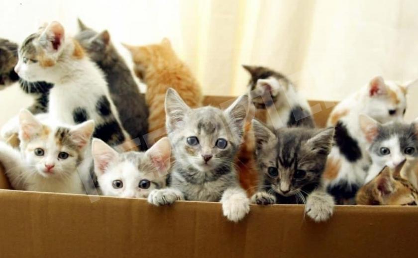 Нужно «пристроить» бездомного котенка? Приют поможет!