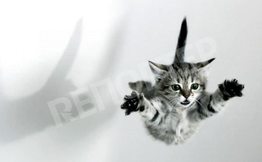 Днепровский кот стал жертвой пьяницы-живодера 18+