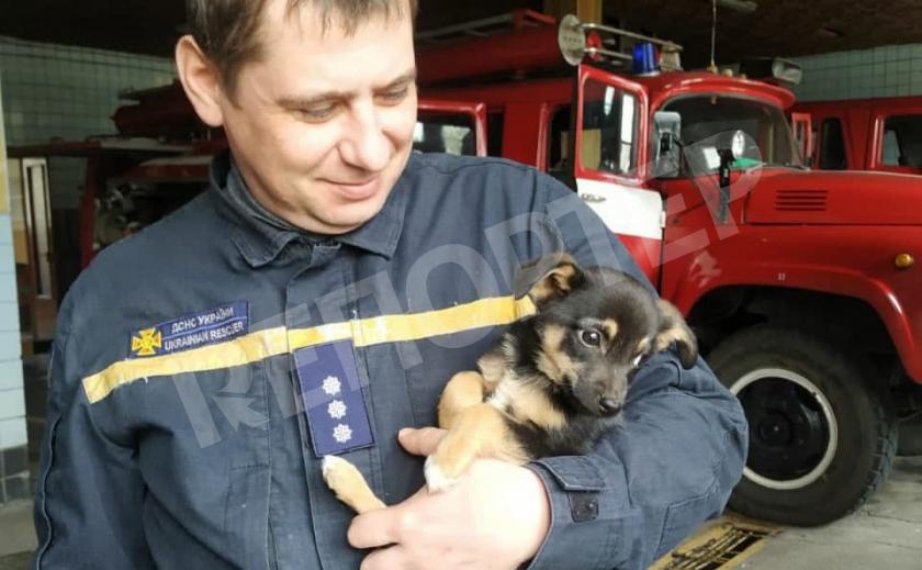 Пёс полка. В Днепре спасли щенка из подвала и «усыновили»