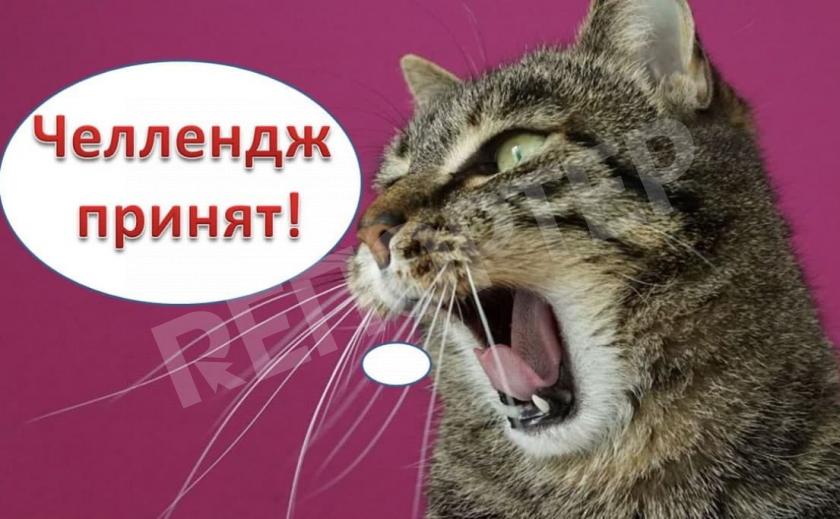 «Коточеллендж» продолжается! Днепровский мурлыка снова поднял на ноги спасателей