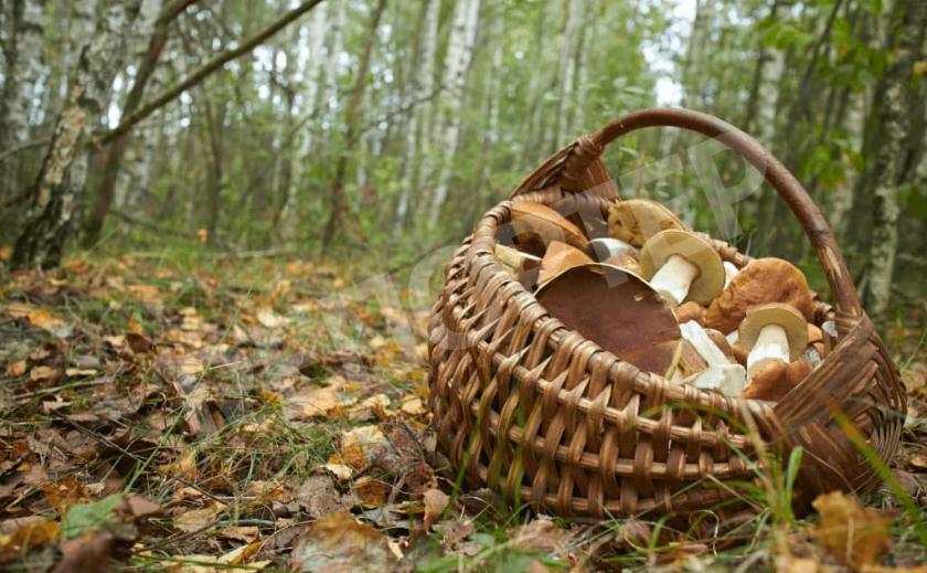 Днепровские грибники открыли сезон!