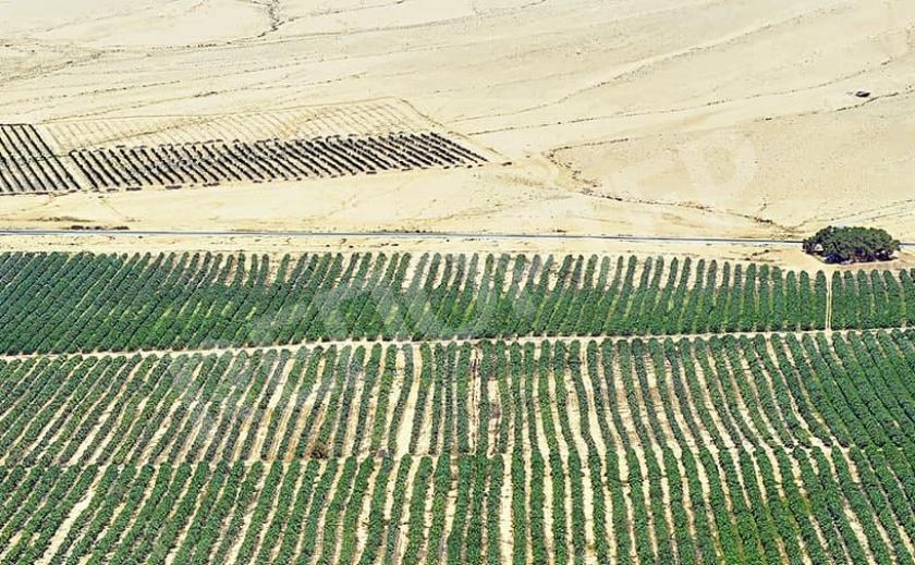 Экономные украинцы выбирают картошку, выращенную в пустыне