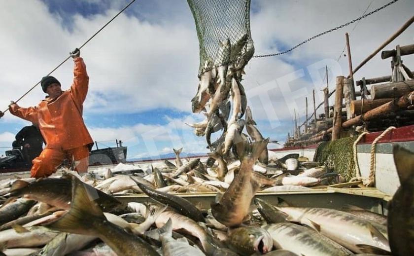 На Днепропетровщине продлили нерестовый запрет для промысловиков