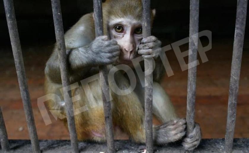 В Украине хотят запретить использование животных в цирках
