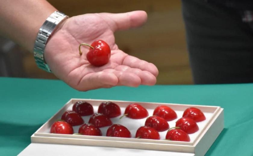 В Японии продают черешню по $270 за штуку