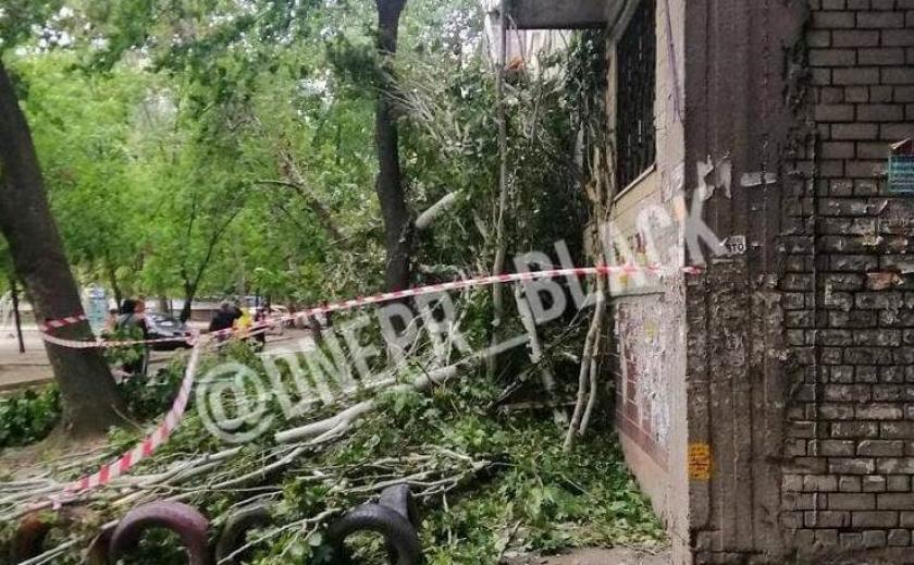 В Днепре дерево завалилось на жилой дом