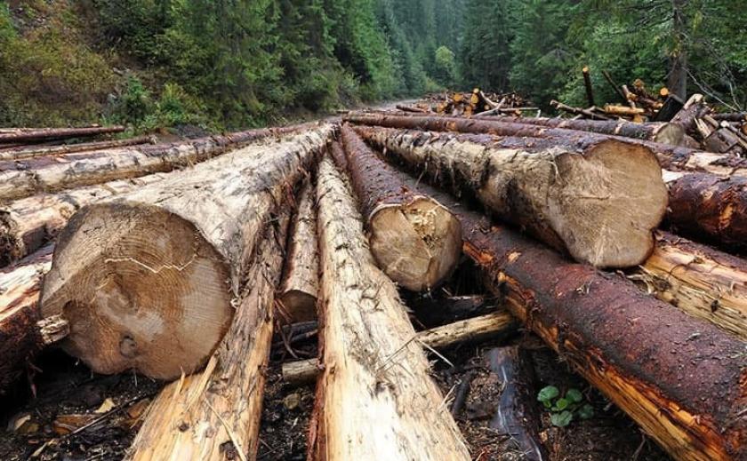 В Украине до конца года может заработать рынок древесины