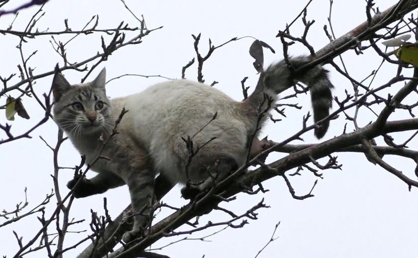 В Днепре спасли кота от смертельного прыжка ФОТО