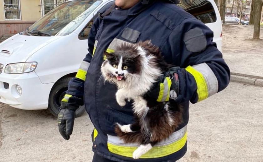 Пожарные Днепра спасают животных абсолютно бесплатно