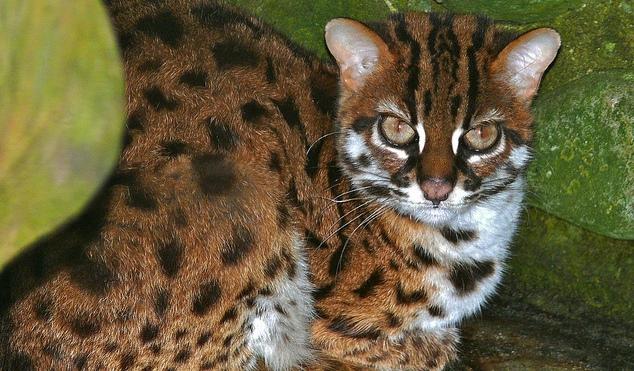Коронавирус спас кошек от китайских гурманов