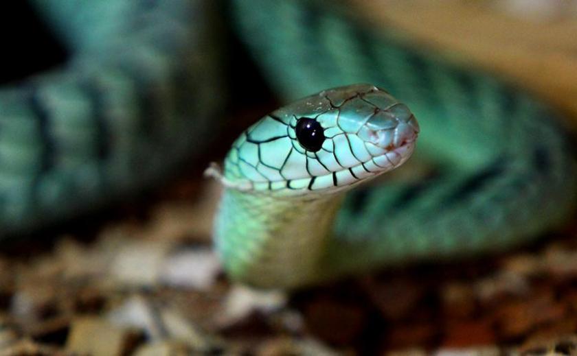 Ползучие гады. Все, что вы хотели знать о распространяющих вирусы змеях