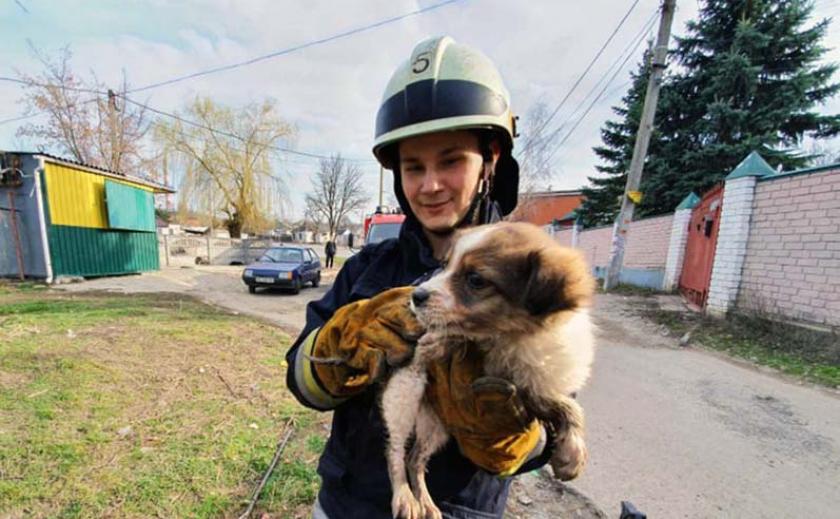 Спасатели Днепра вытащили щеночка из канализации ФОТО ВИДЕО