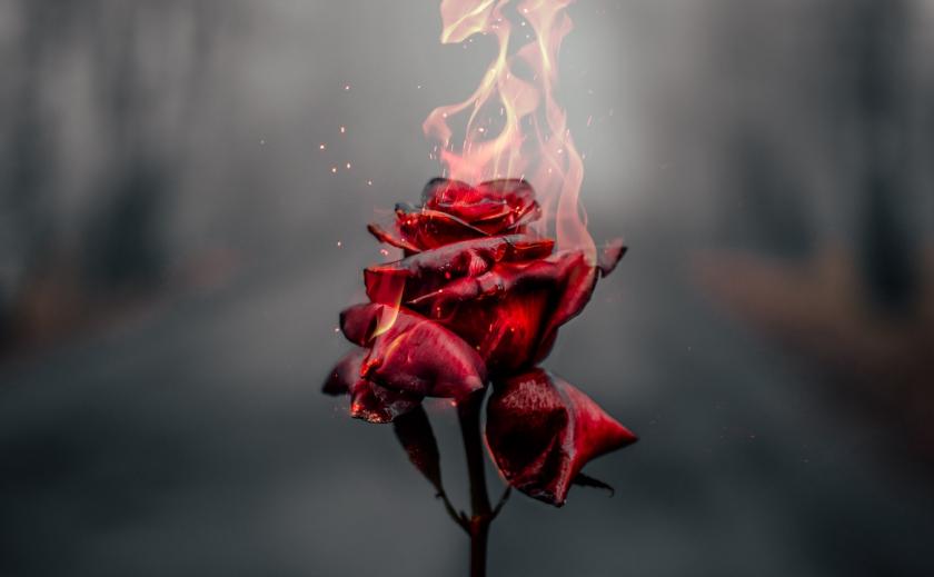 Ни себе, ни людям… В Днепре за городом сожгли море цветов ФОТО