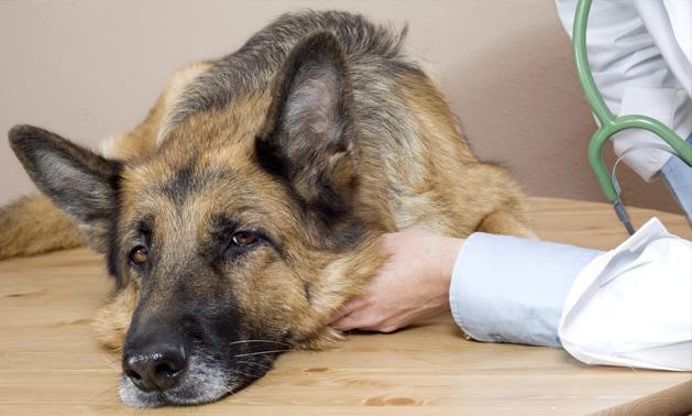 В Кривом Роге нашли кладбище отравленных собак ФОТО