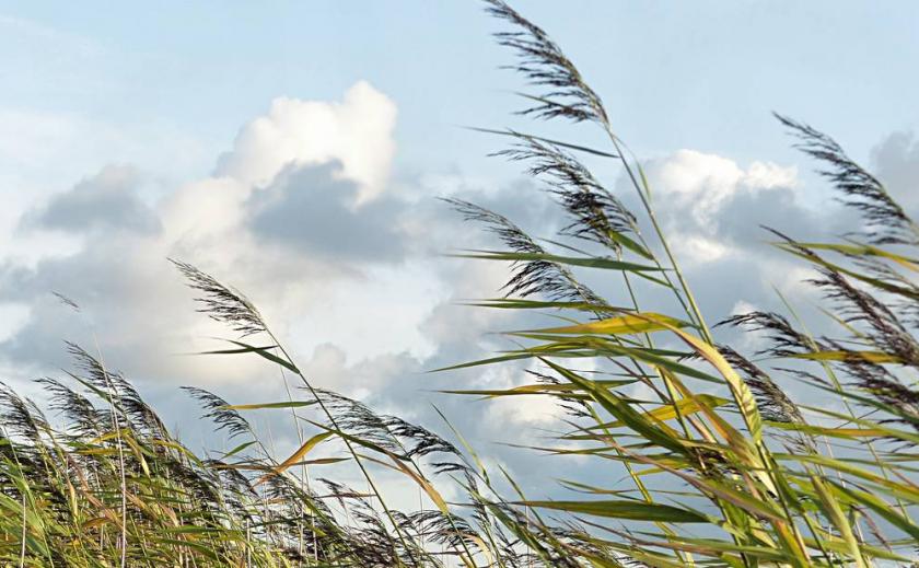 В Днепре определяют весеннюю погоду по ветру ПРОГНОЗ НА СУТКИ