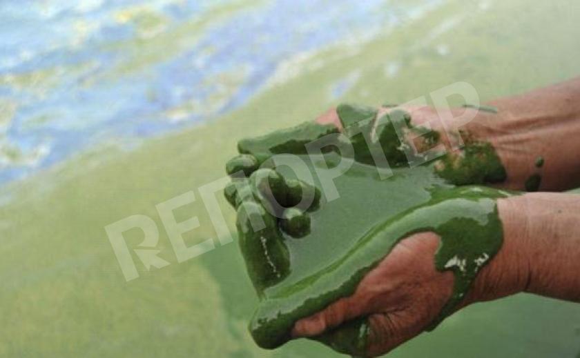 Экоцид по-приднепровски. Обнаружена еще одна зона бедствия: река с клеем вместо воды