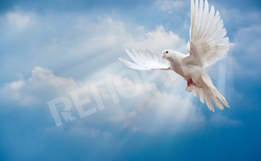Голубь - Богом любимая птица!