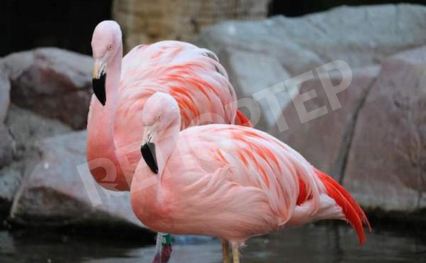 Фламиннго можно считать настоящим восьмым чудом света