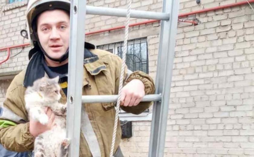 Спасатели Днепропетровщины достали котейко с огромной высоты ФОТО