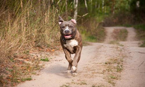 В Днепре прогулка с собакой закончилась «заламыванием» хозяйки ВИДЕО