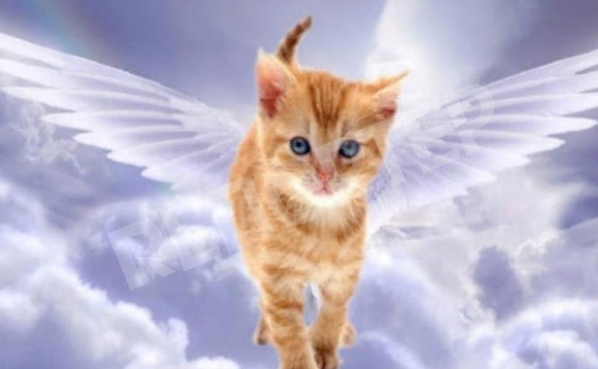 Что происходит с душами животных после смерти