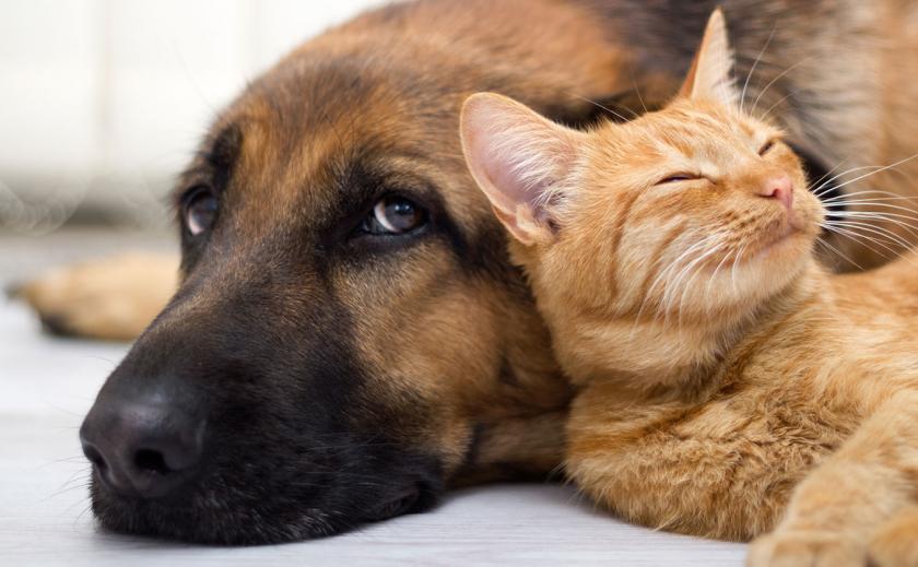 В Днепре от голодной смерти спасли свыше двух десятков котов и собак