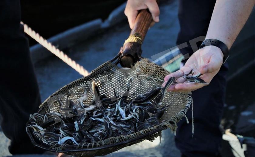 Днепр побалует рыболовов краснокнижной рыбой