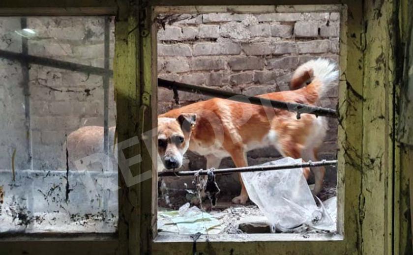 В Днепре спасли парочку щенков