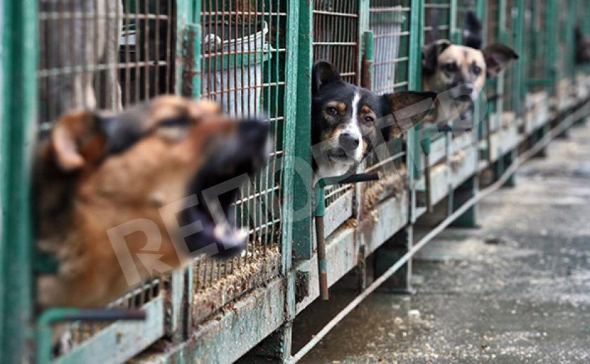 Власти КНДР на своих решениях «собаку съели»