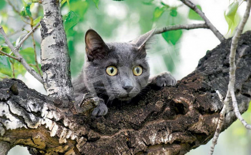 В Днепре спасатели сняли с 6-метрового дерева испуганного котейку