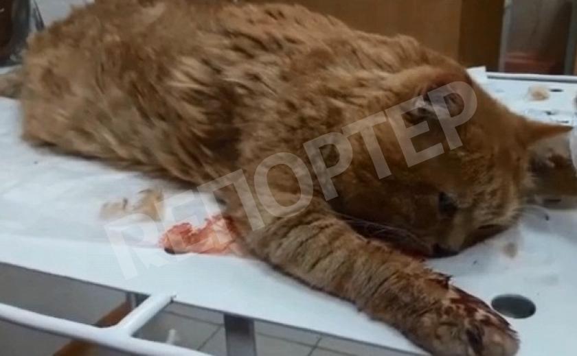 В Днепре выживший из ума дед убил кота, сбросив с девятого этажа