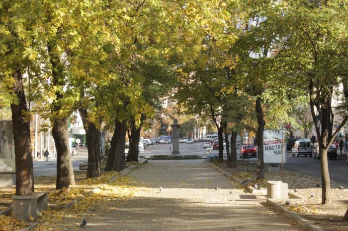 В центре Днепра вырубят деревья и перекроют улицу