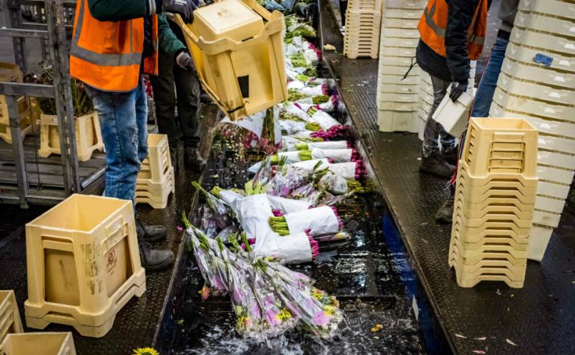 В Нидерландах призывают покупать цветы, а не туалетную бумагу