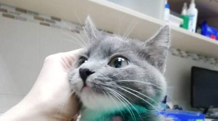 В Днепре кошку изуродовали самолечением ФОТО 16+