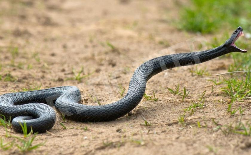 По Днепру ползают змеи
