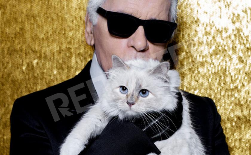 Звездная кошка Лагерфельда «одобряет» мебель немецкого бренда
