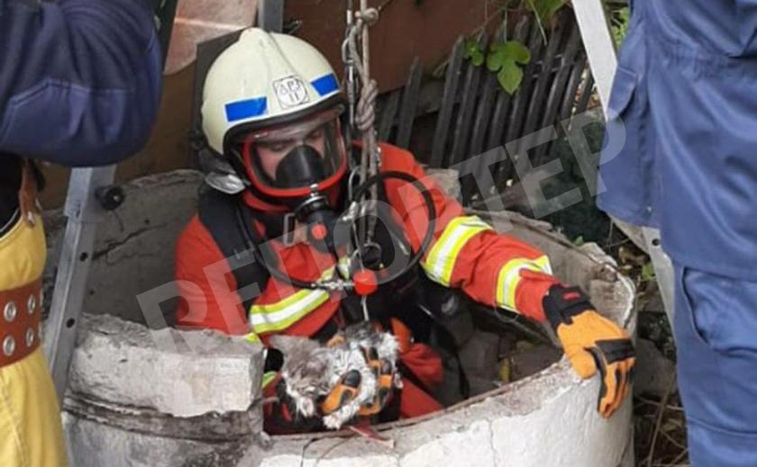 В Днепре котейко угодил в 15-метровый колодец с водой