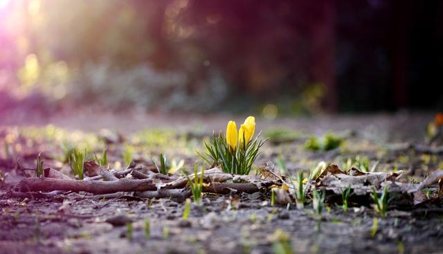 Ближайшие сутки в Днепре обещают быть рекордными по температуре